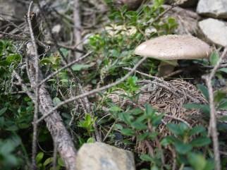 Die Pilze putzt Ihr am besten noch im Wald. foto (c) kinderoutdoor.de