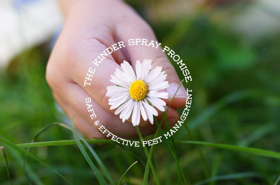 Kinder-Spray-provides-natural-pest-control-services