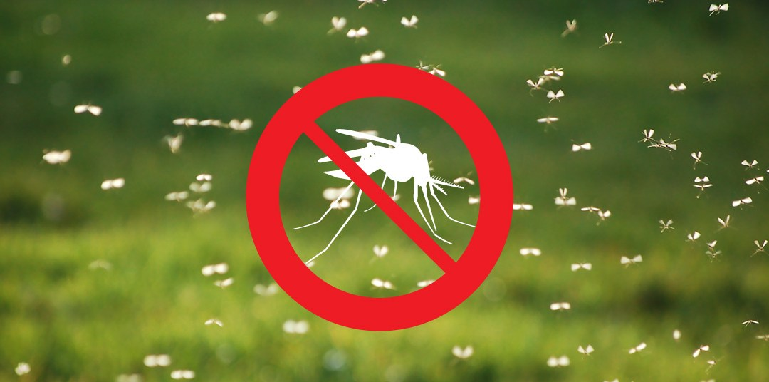 We're Your Guide to Norfolk County Mosquito Control