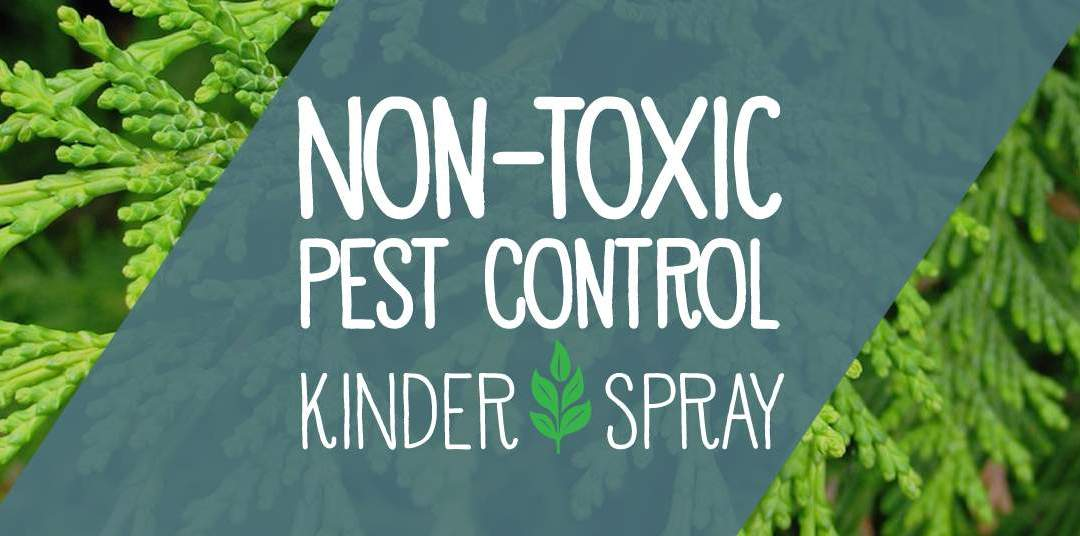 Non-Toxic Pest Control Services from Kinder Spray