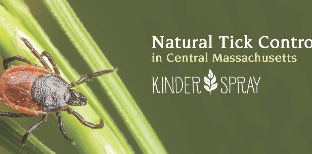Natural Tick Control in Central Massachusetts