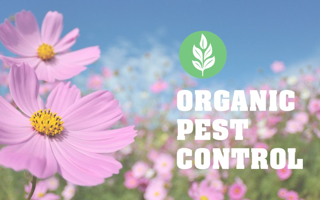 Organic Pesticides: Because You Don't Have to Choose Between a Healthy and a Pest-Free Lifestyle