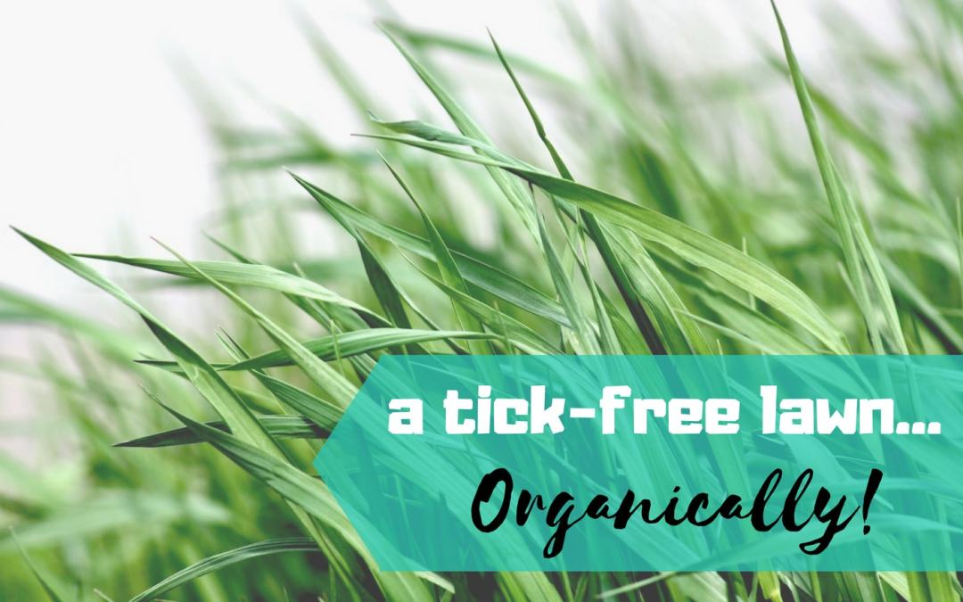 Interested in Organic Lawn Care? Don't Forget Pest Control