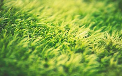Lawn Aeration Service and More Natural Lawn Care from Kinder Spray