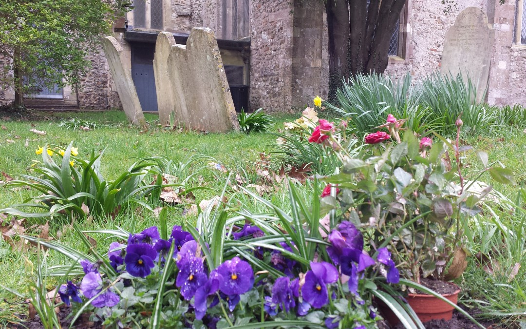 Planting Pansies: A Remembrance
