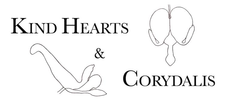 dicentra corydalis
