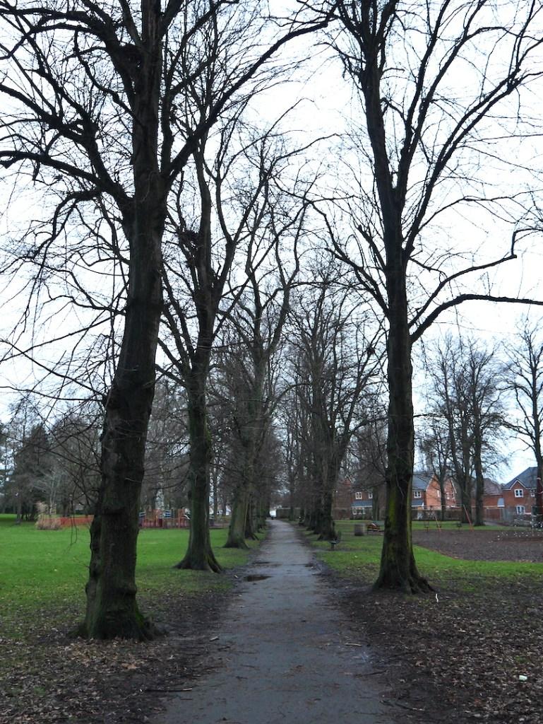 Tree following