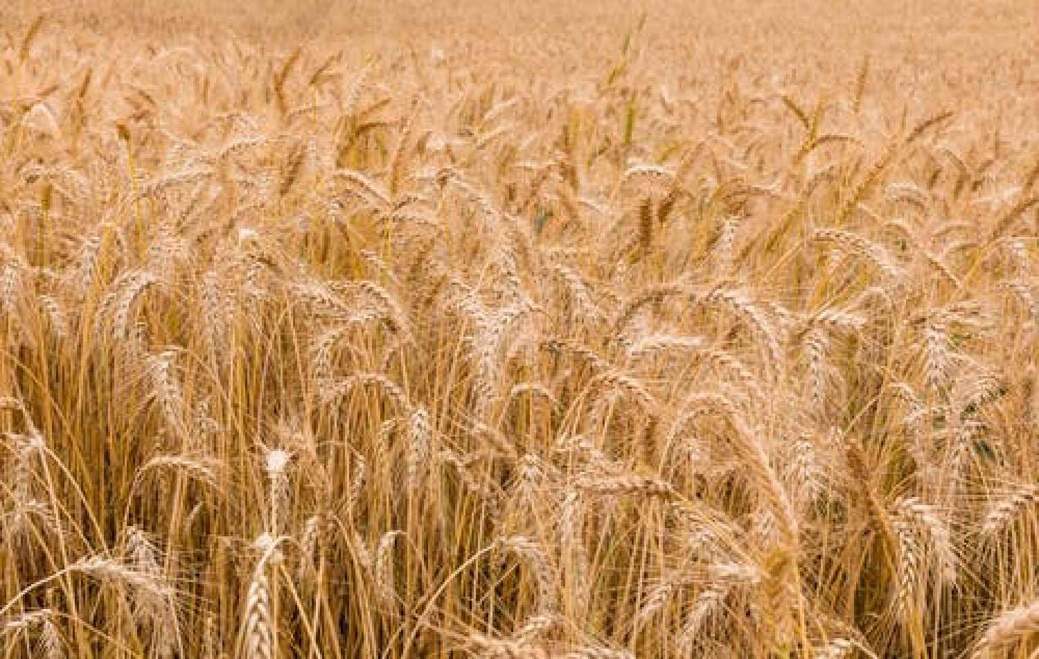 8 signs that you are gluten intolerant