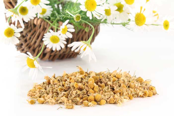 Chamomile Tea For Pain Relief Caused By Teething