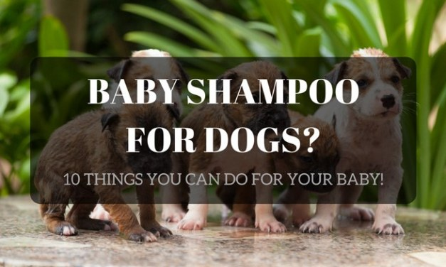 Baby Shampoo for Dogs: 10 Important Things to Do for Your Baby