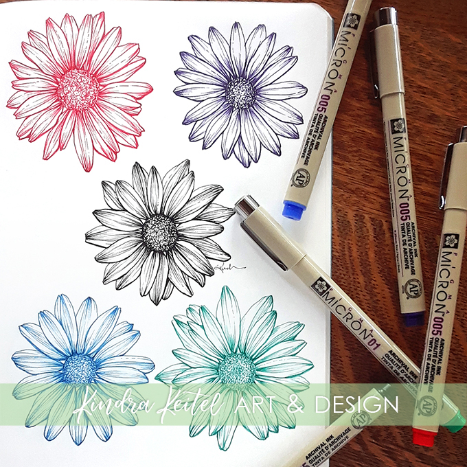 daisy botanical illustration