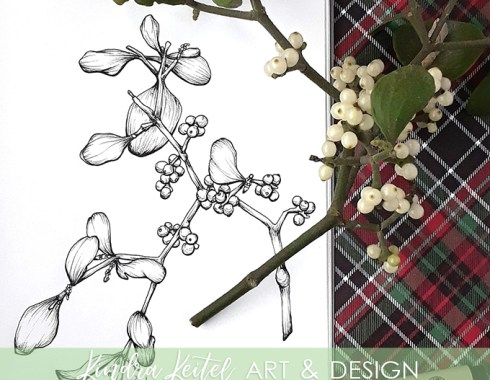 mistletoe botanical illustration