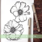 butterfly ranunculus botanical illustration