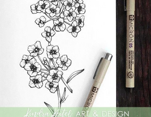 alyssum botanical illustration