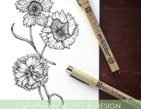 carnation botanical illustration