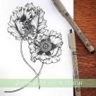 oriental poppy botanical illustration