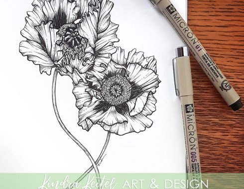 oriental poppy botanical illustration