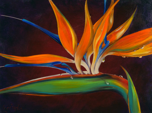 Birds of Paradise Morning Dew by Lucinda Hayes