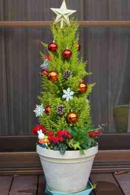 ガーデンシクラメンクリスマス