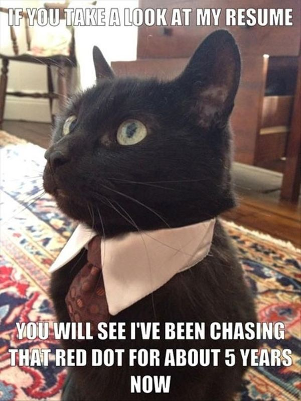 Funny Cat Memes Best Cute Kitten Meme And Pictures