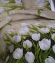 Tulip Xenia