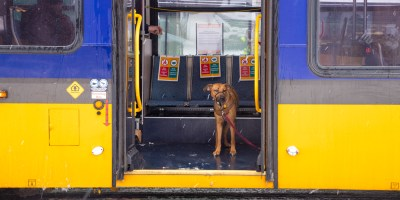 Dog on a bus