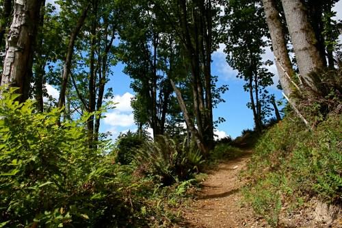 Taylor Mountain Trail