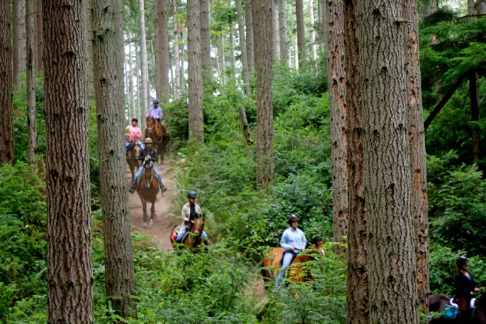 Equestrians at Island Center Forest