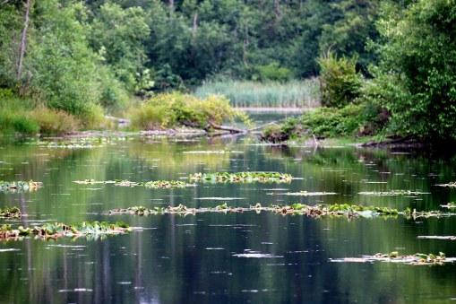 Cavanaugh Pond