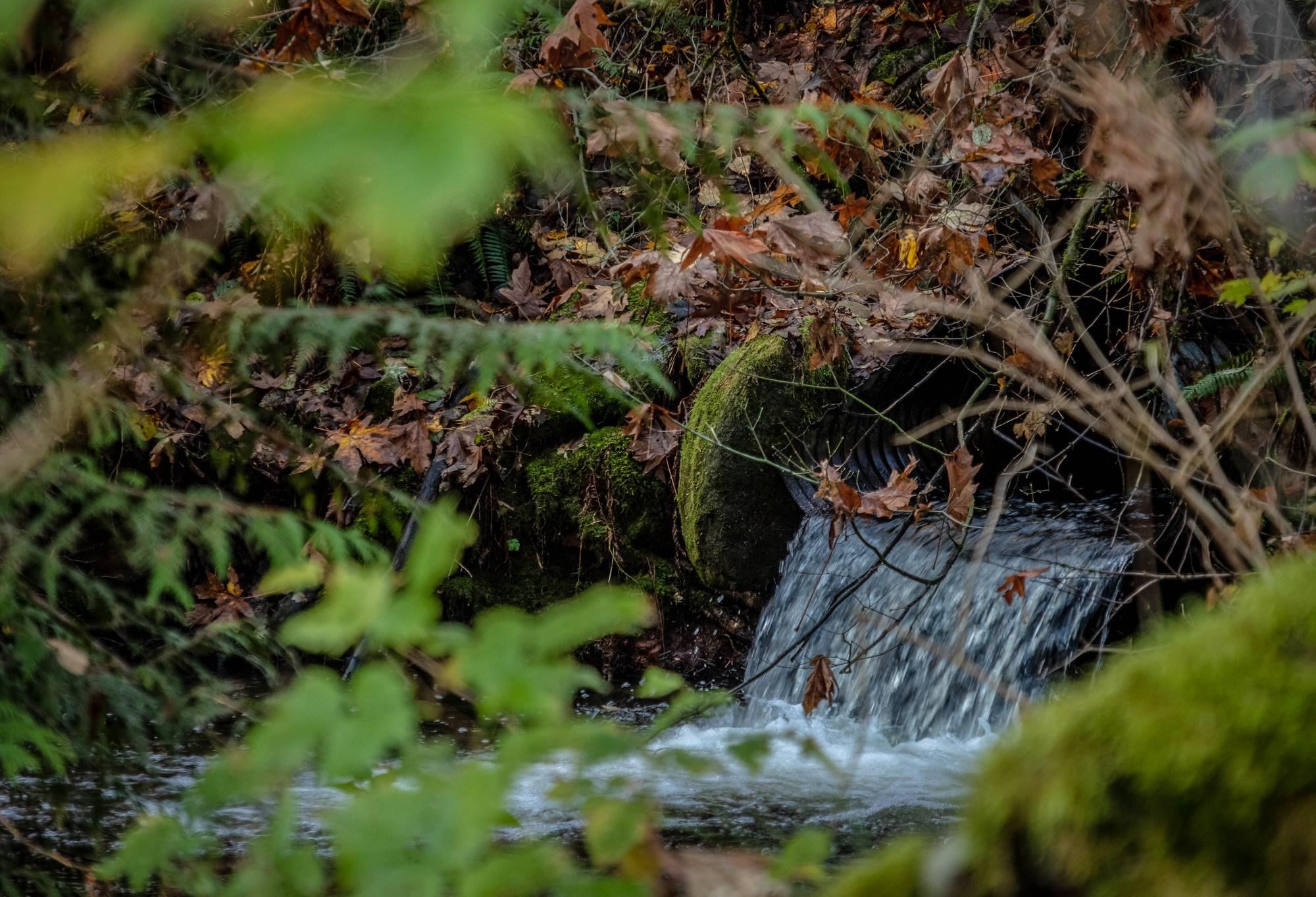 Taylor Mountain creek