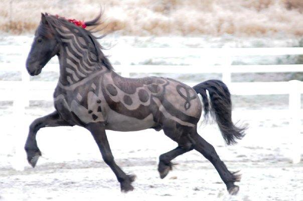 https://i2.wp.com/kingdomofhorses.com/wp-content/uploads/2012/11/body-clipped-horse.jpg
