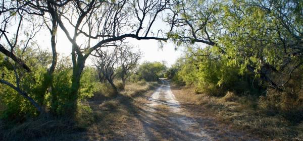 lebh shomea path