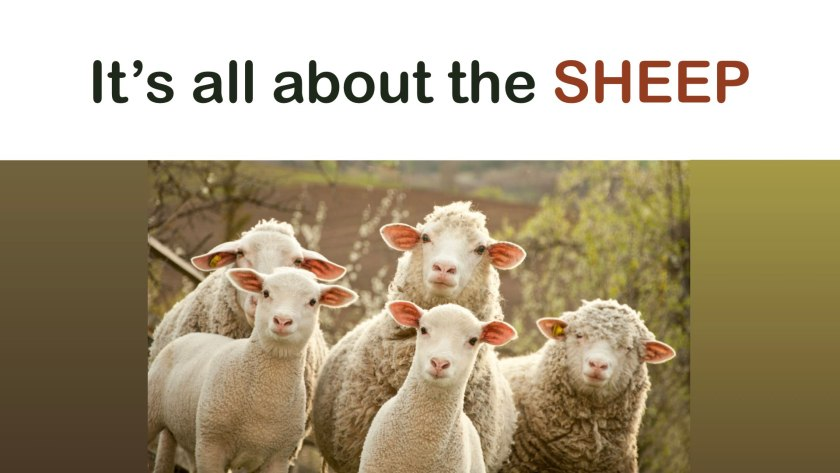 It's All About The Sheep