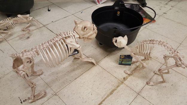 Halloween skeleton animals fun