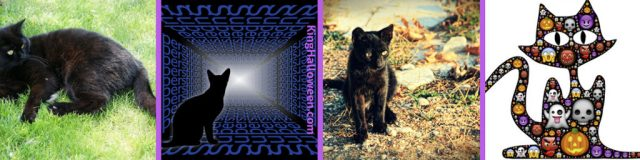 Black Cat Superstitions Pictures