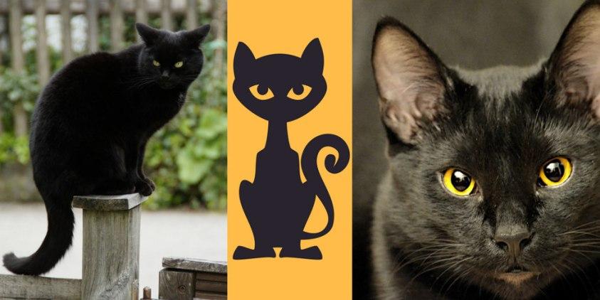 Three Black Cat Symbolism Images