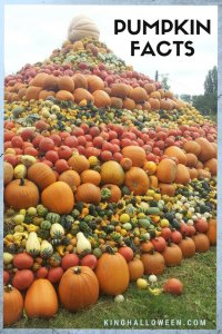 Pyramid of Pumpkin Facts