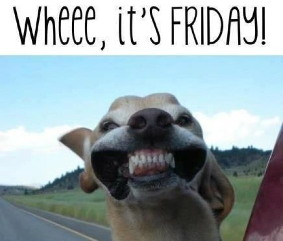 A dog meme happy its Friday but I hate Monday