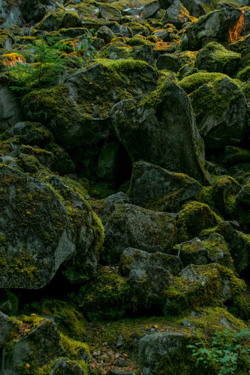 rocky cliff slope covered with moss