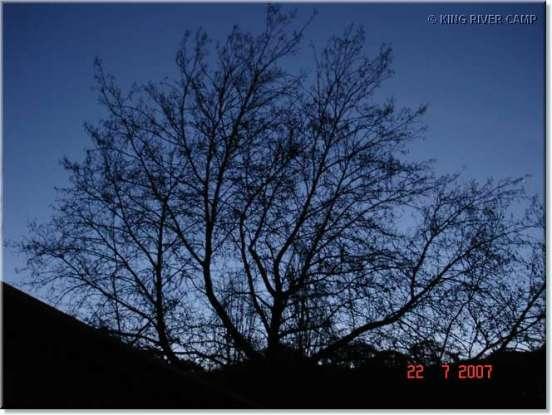 Night Falls over our massive Oak