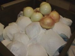 Paper towels protect each onion in the crisper drawer