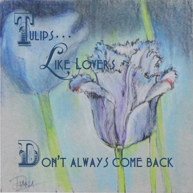 Tulips, like lovers...  Don't always come back!