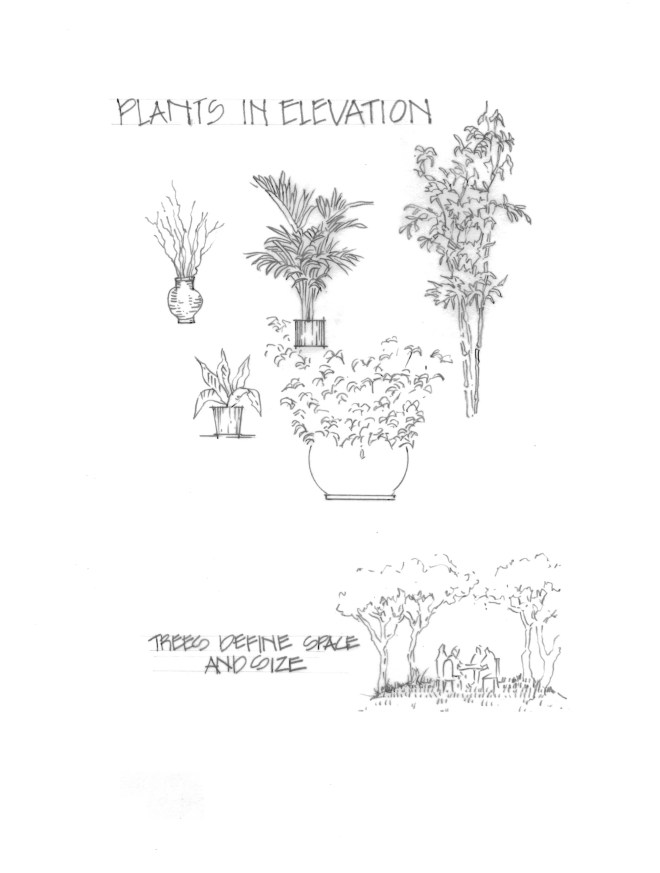 Plants in elevation.