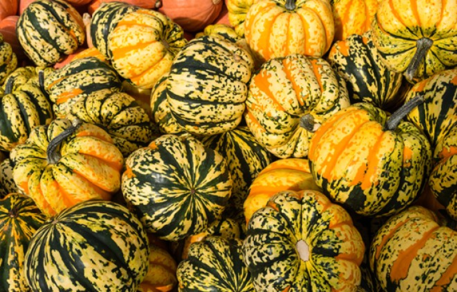 Carnival squash at the market