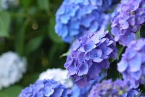 父の日 花,父の日 花 種類,父の日 花 何