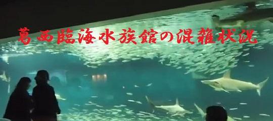 葛西臨海水族館 混雑状況