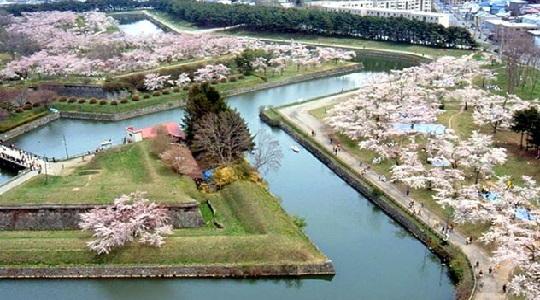 ゴールデンウィークに北海道旅行するなら五稜郭公園の桜がおすすめです