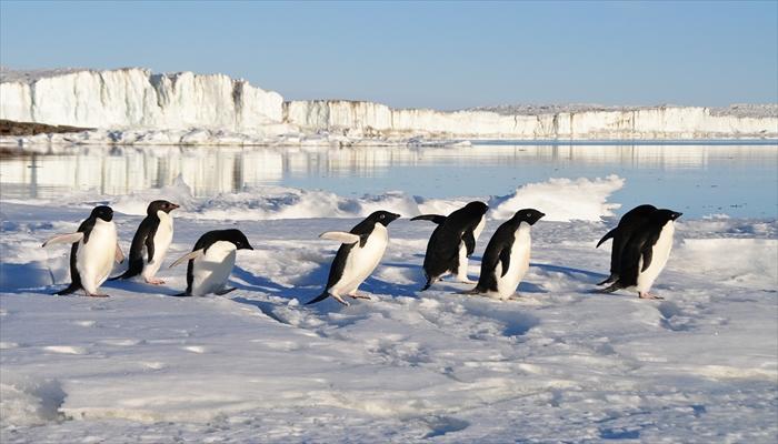 凍結 雪道 転ばない歩き方