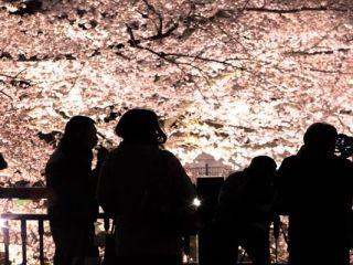 夜桜 服装 防寒対策