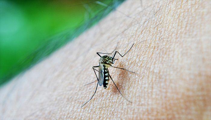 夏にしたいこと 蚊取りスプレー